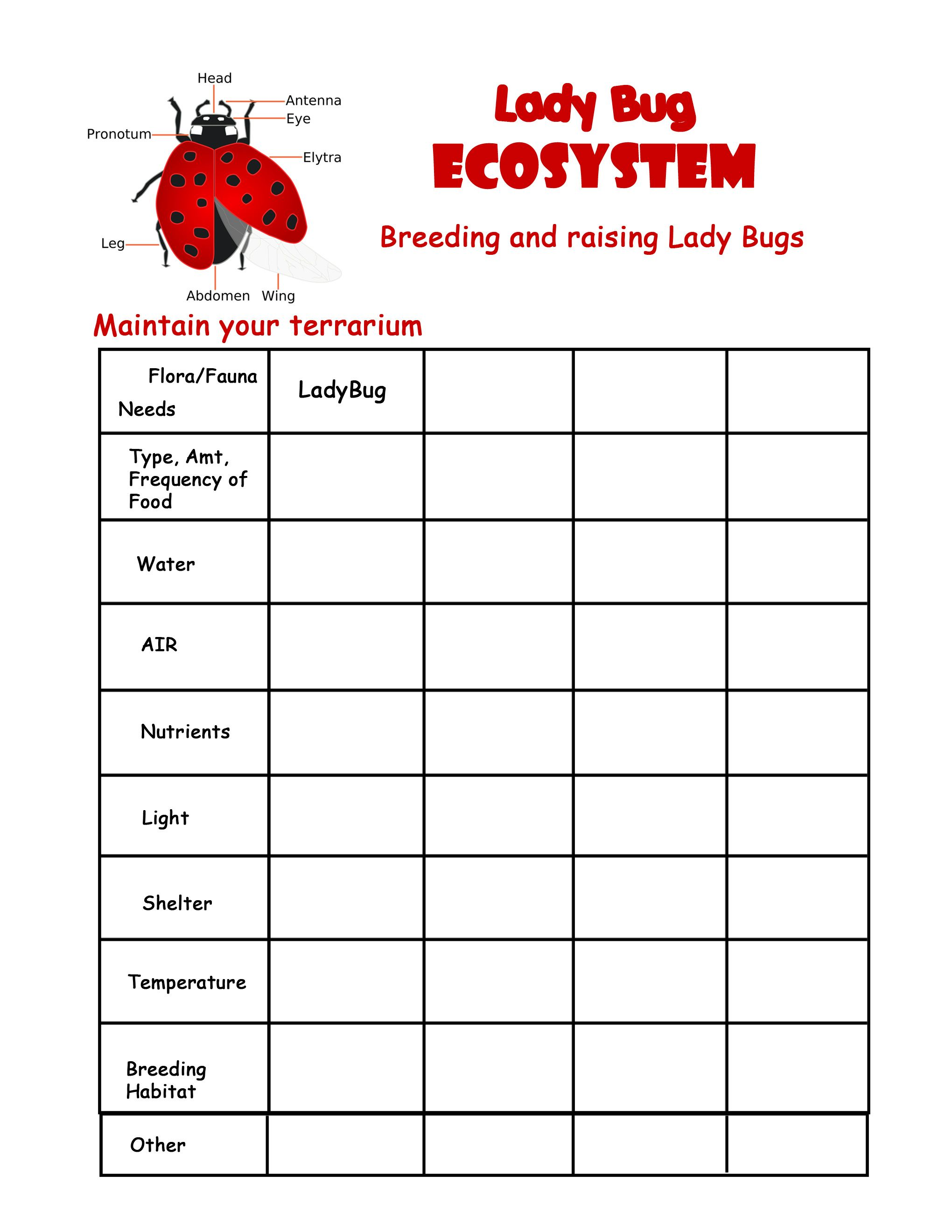 Free Worksheet Ecosystems Worksheets ladybug terrarium maintenance worksheet unit pinterest ladybugs and worksheets