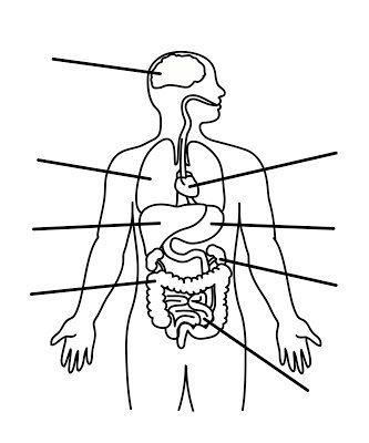 Aparato Digestivo Para Pintar Detallado Sistemas Del Cuerpo Humano Cuerpo Humano Para Ninos Organos Del Cuerpo Humano