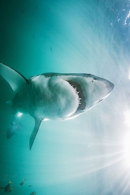King of the sea! | by: { Morne Hardenberg }