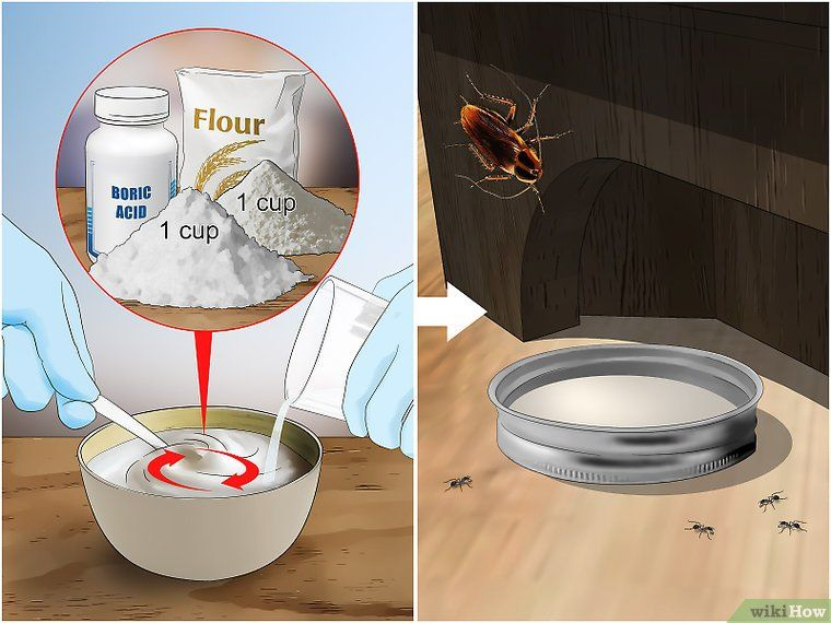 3 Ways to Kill Cockroaches or Ants Without Pesticide - wikiHow DIY