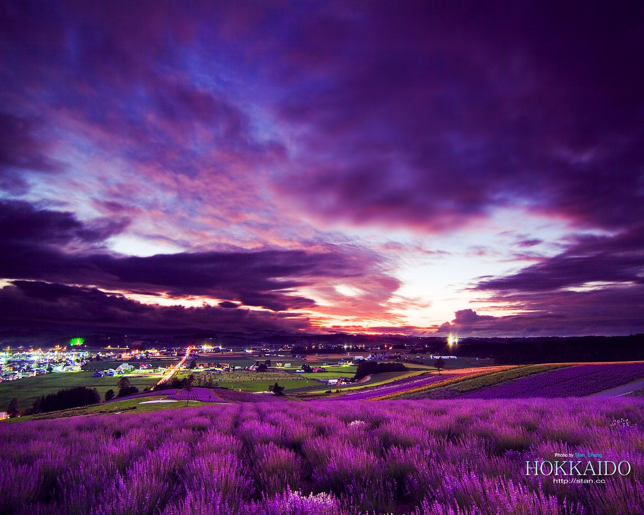 Lavender Wallpaper Purple World Plain Scenery Wallpaper