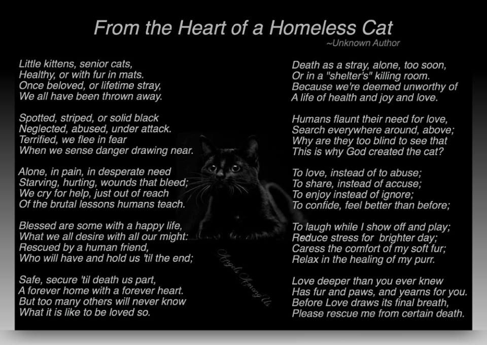 Homeless Cat Prayer Senior Cat Pet Loss Grief Animal Advocacy