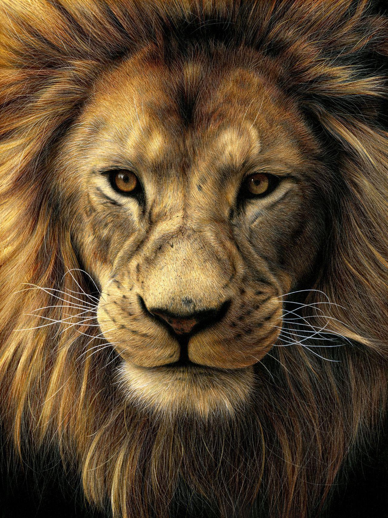 Lion Drawing Color : drawing, color, Drawing, Colored, Pencil, Drawing,, Realistic, Drawings,