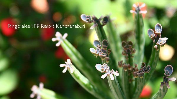 Shot ธรรมชาติน่ารักๆของ ปิงปาลีย์ รีสอร์ท กาญจนบุรี ที่เราอยากนำมาฝากคุณ