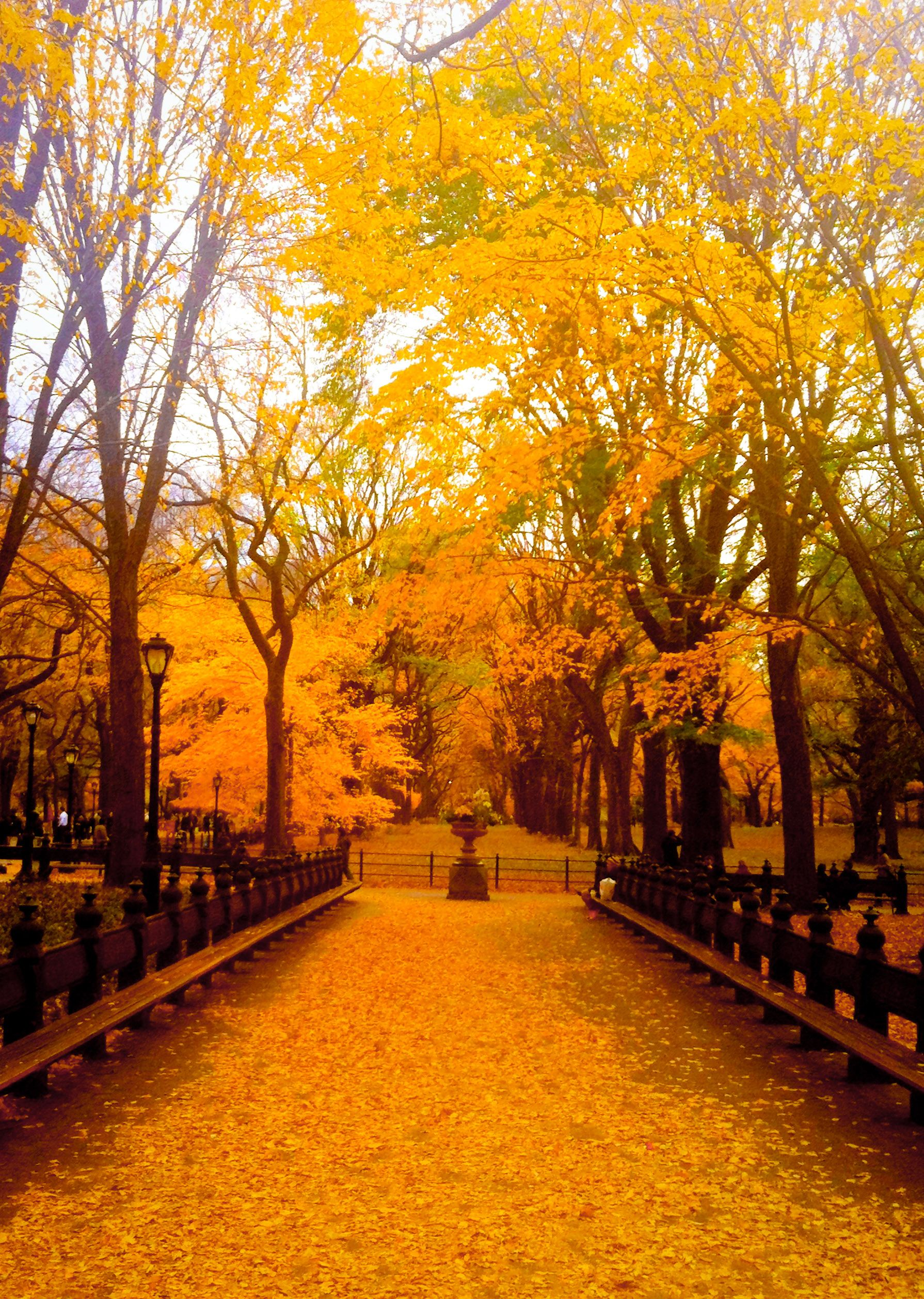 Central Park, New York During Fall