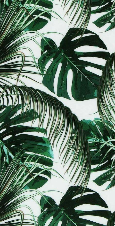 Super Tropical Wallpaper Iphone Summer Wallpapers 60 Ideas Leaves Wallpaper Iphone Leaf Wallpaper Aesthetic Iphone Wallpaper