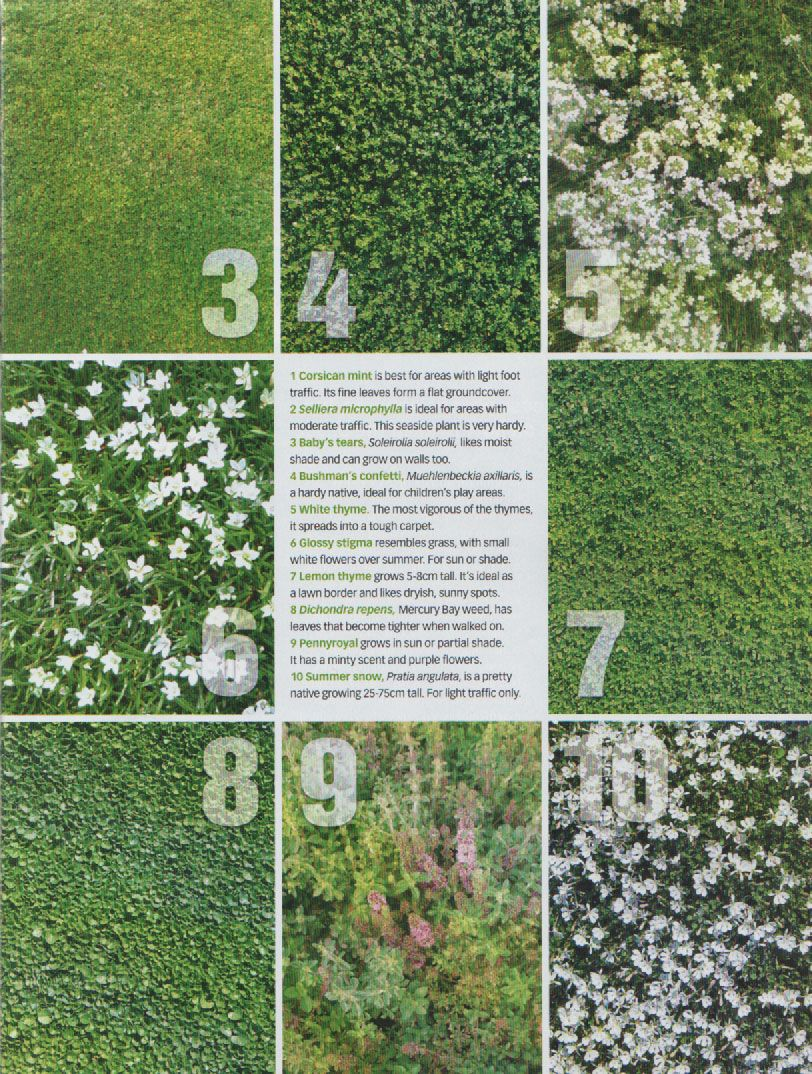 No Mow Grass Substitues | Lawn alternatives, No grass ... on No Mow Backyard Ideas id=25031