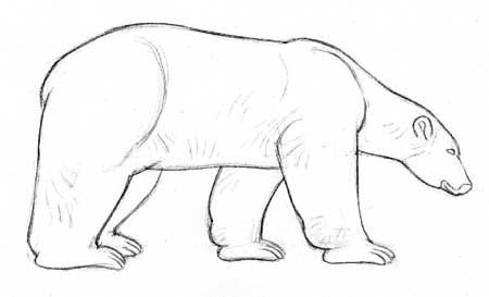Dibujar los osos polares | Character Studies & References ...