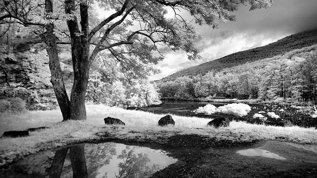 Infrared photograph Esopus Creek - Mt Tremper, NY