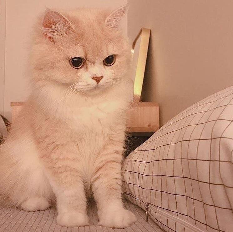 12 Cute Cats Aesthetic