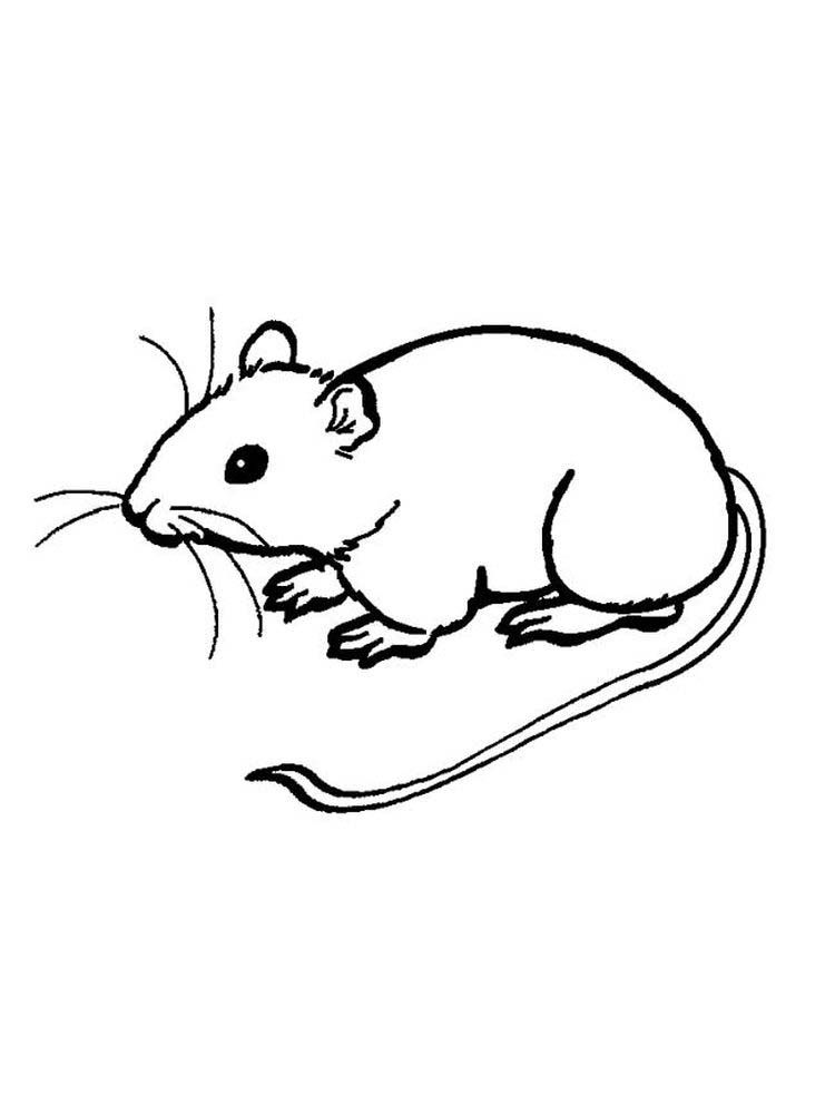 Mouse Eating Cheese Coloring Page Mouse Are Animals That Have Characteristics On Minnie Mouse Coloring Pages Mickey Mouse Coloring Pages Animal Coloring Pages