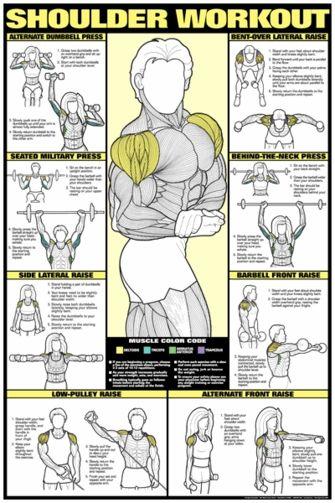 Shoulder Workout Poster – Laminated
