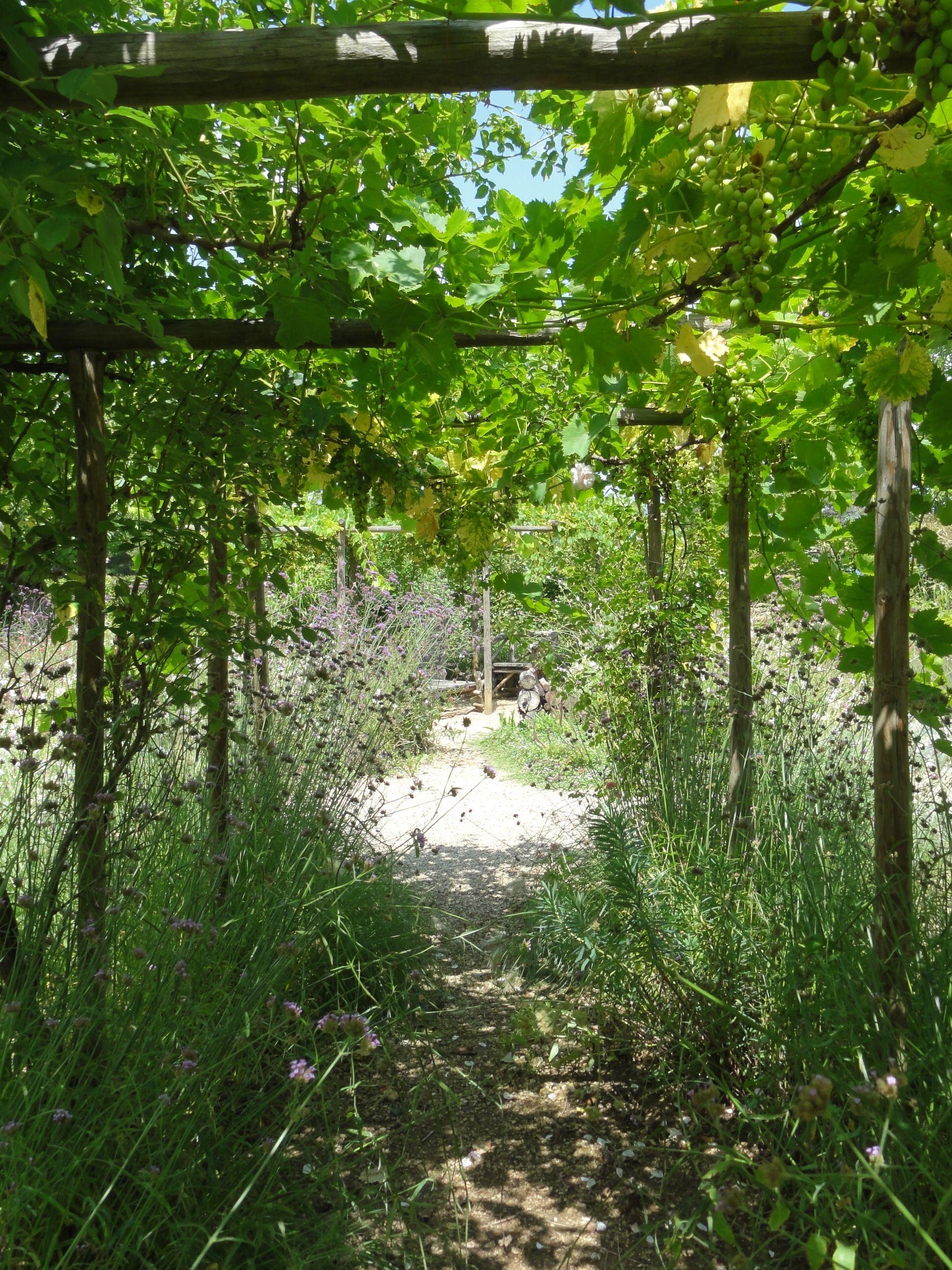 Jardin sec de prayssac lot vigne suspendue vigne jardin for Jardin sec
