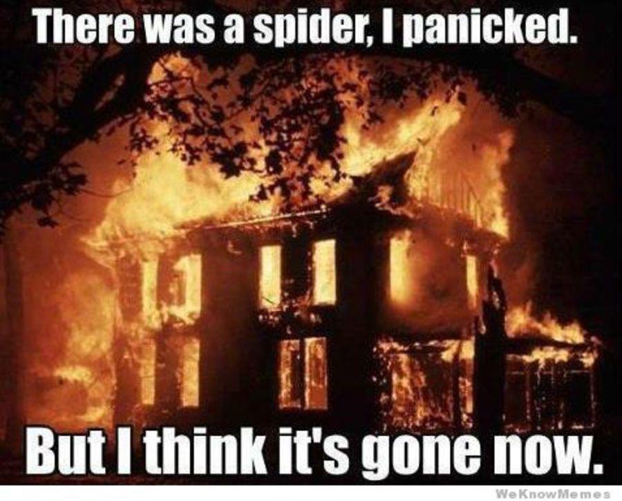 I M Scared Of Spiders Meme 2yamaha Com