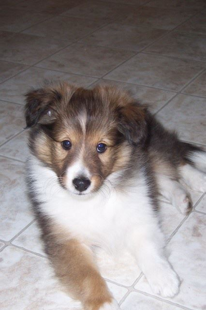 Looks Like My Dallas When She Was A Pup Gorgeouspuppies Dogs