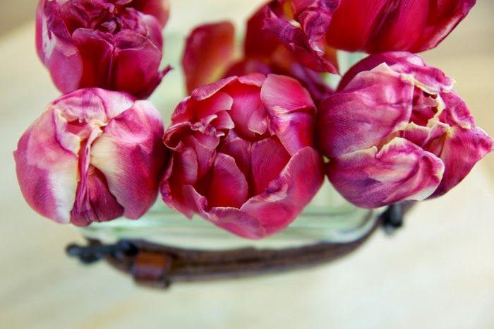 Tarja's Snowland, tulips
