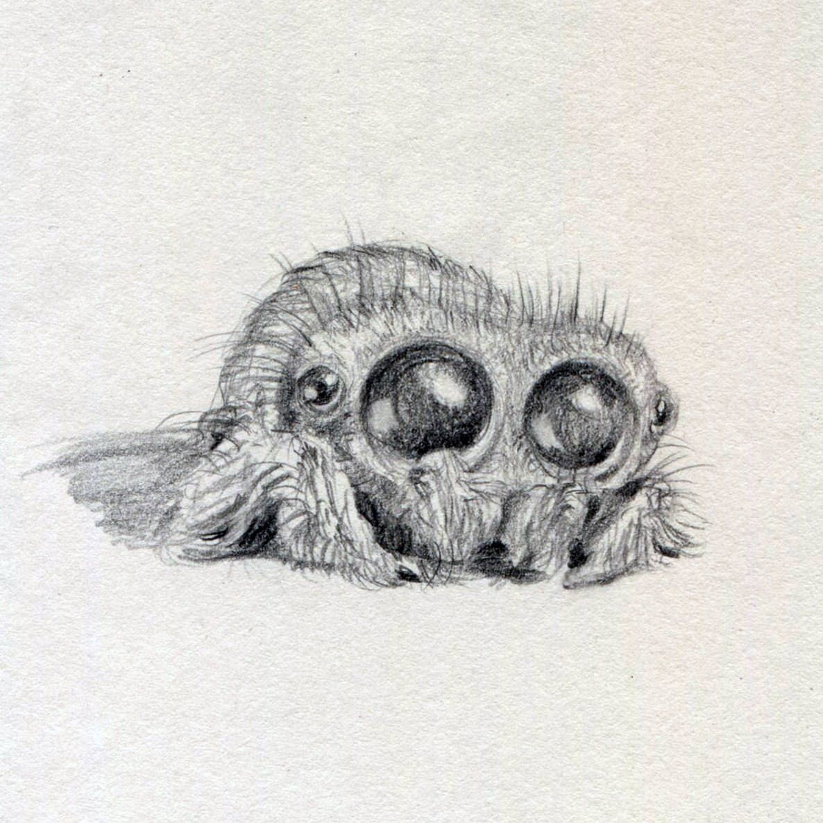 Lucas The Spider Drawings Drawings Art Painting