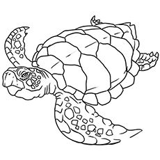 10 Cute Sea Turtle Coloring Pages Your Toddler Will Love
