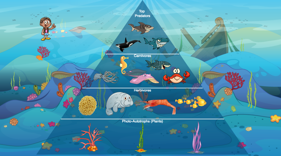 create an interactive ecological pyramid to track how