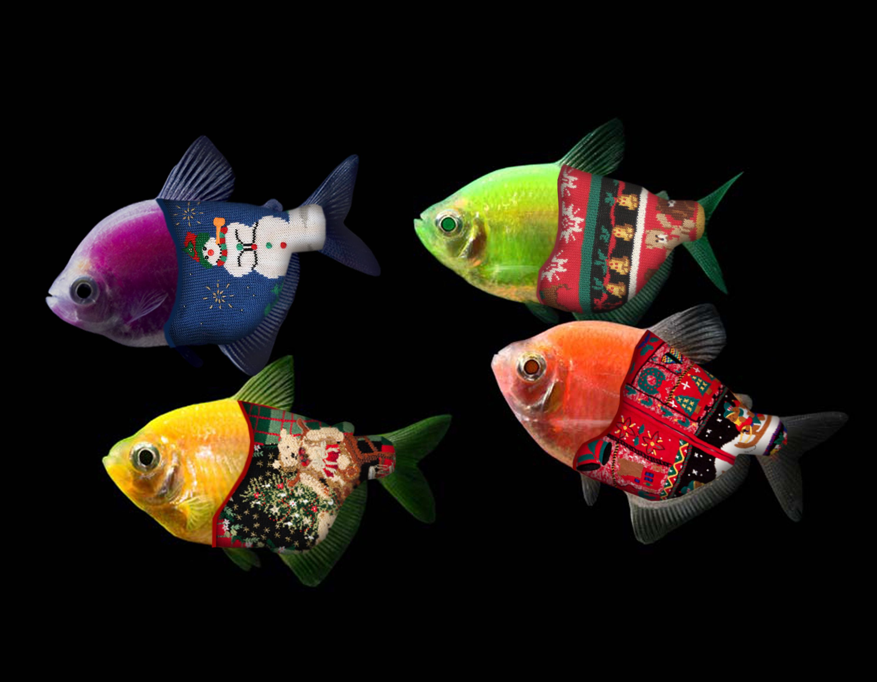 Merry Christmas and Happy Holidays from the GloFish team