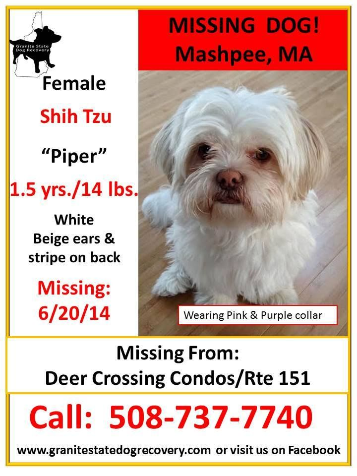 Missing Female Shih Tzu Mashpee Cape Cod Ma 6 20 14 Piper Is