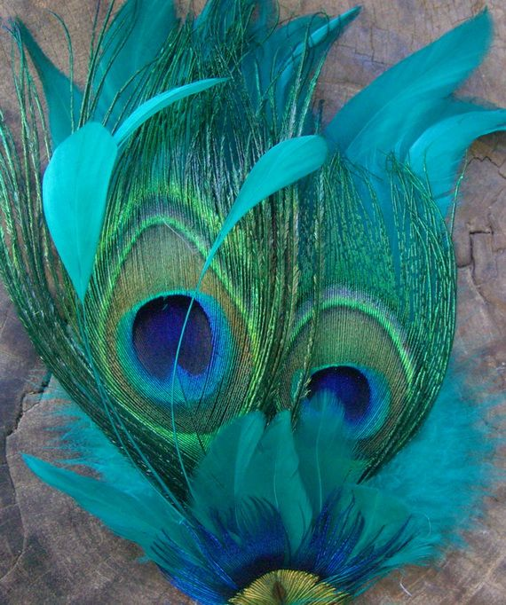 Pin by Narendra Podar on nicky | Peacock, Peacock feathers