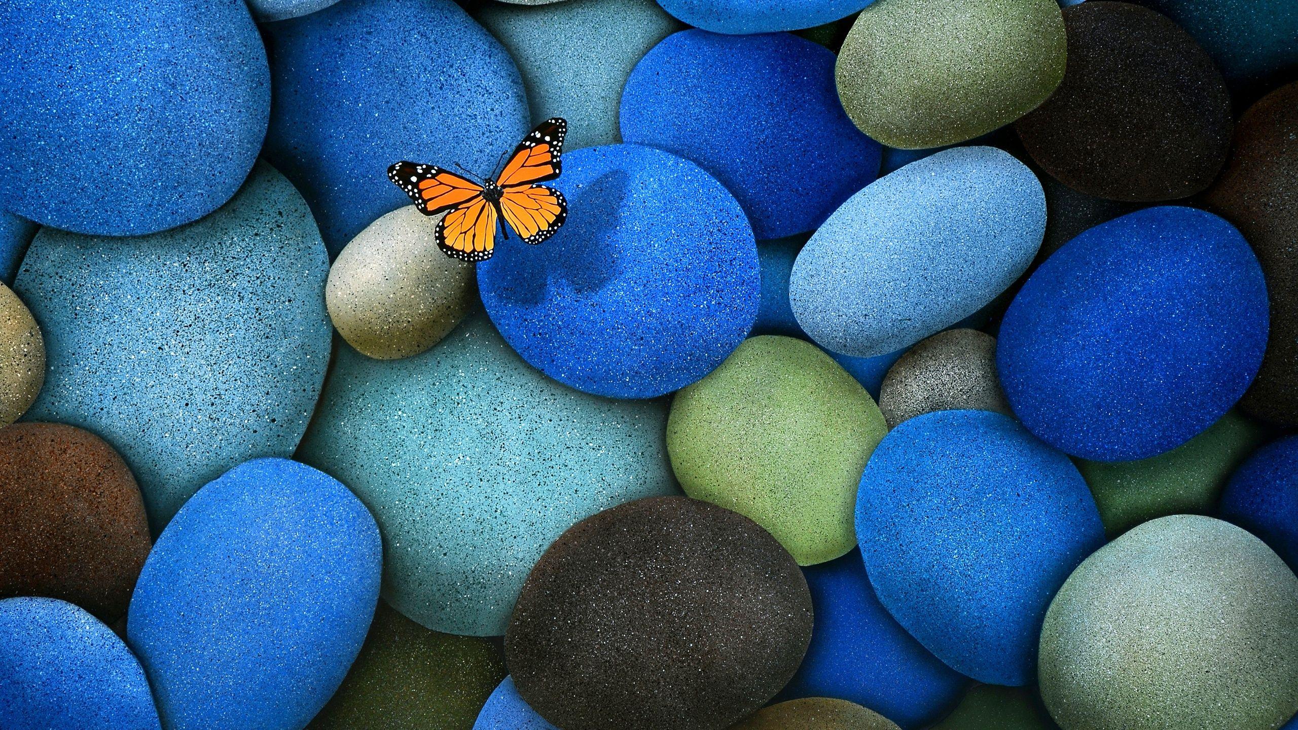 Butterfly on blue pebbles wallpaper | Butterfly wallpaper ...