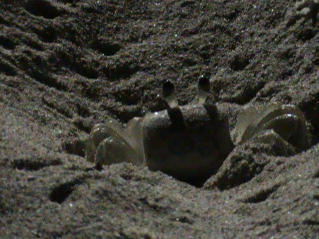 Descoberta noturna na praia