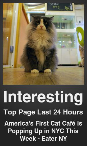 Top Interesting link on telezkope.com. With a score of 7009. --- America's First Cat Café is Popping Up in NYC This Week - Eater NY. --- #topinterestinglinks --- Brought to you by telezkope.com - socially ranked goodness