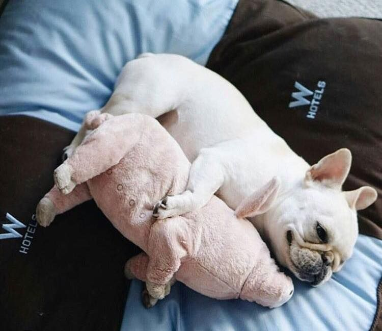 Snap A Pic Of Your Pets Enter Them Into Our Pet Of The Month Contest To Be Featured In Our Issue W French Bulldog Puppies Bulldog Puppies French Bulldog