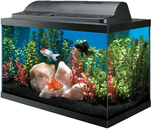 All Glass Aquarium Aag09009 Tank And Eco Hood Combo 10 Gallon All Glass Aquarium Glass Aquarium Aquarium