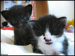 Resultado de imagem para gatinhos