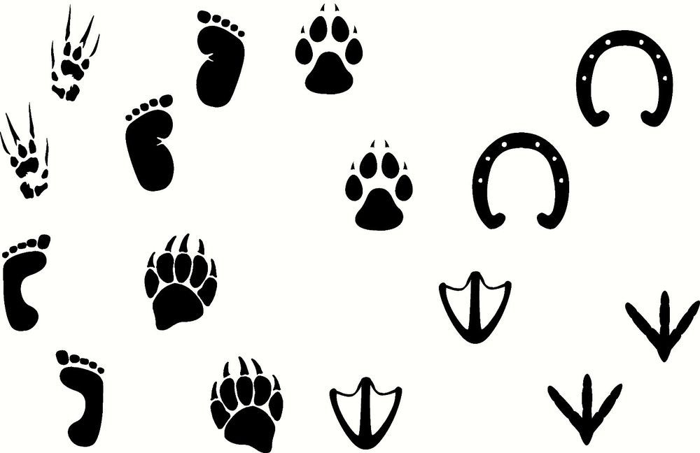 Картинки следы африканских животных