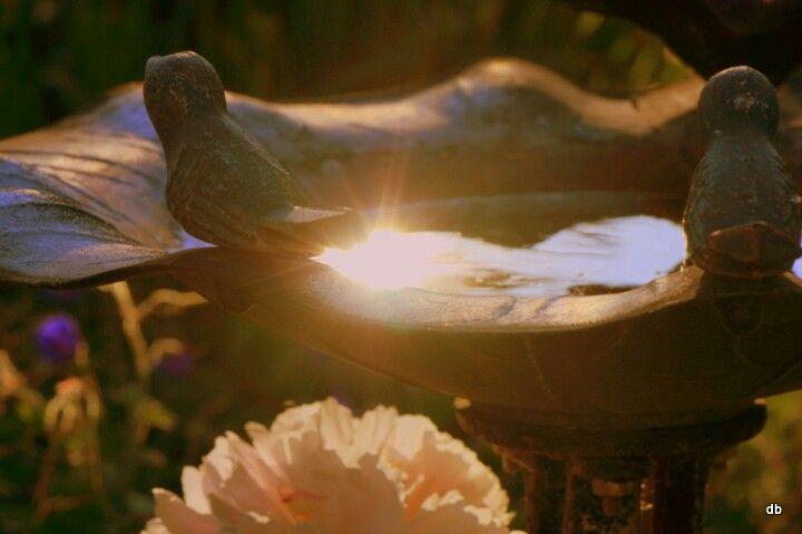 Reflection in a bird bath...
