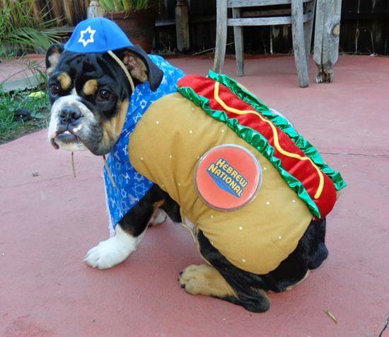 Kosher Hot Dog Dog Halloween Costumes Dog Halloween Pet