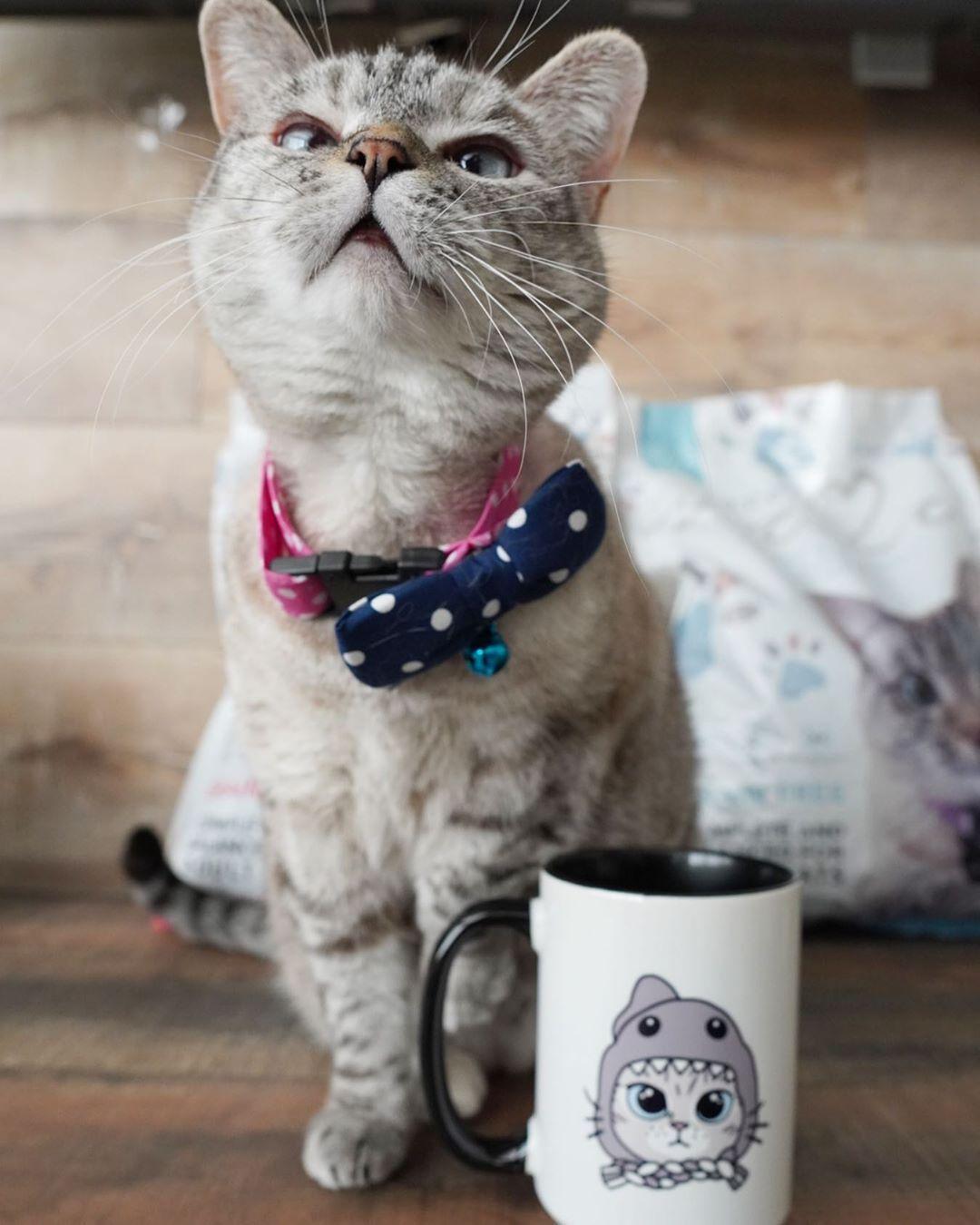 20 1k Likes 91 Comments Nala Cat Nala Cat On Instagram Informations About 20 1k Likes 91 Comments Nala In 2020 Homemade Cat Food Homemade Cat Cat Store