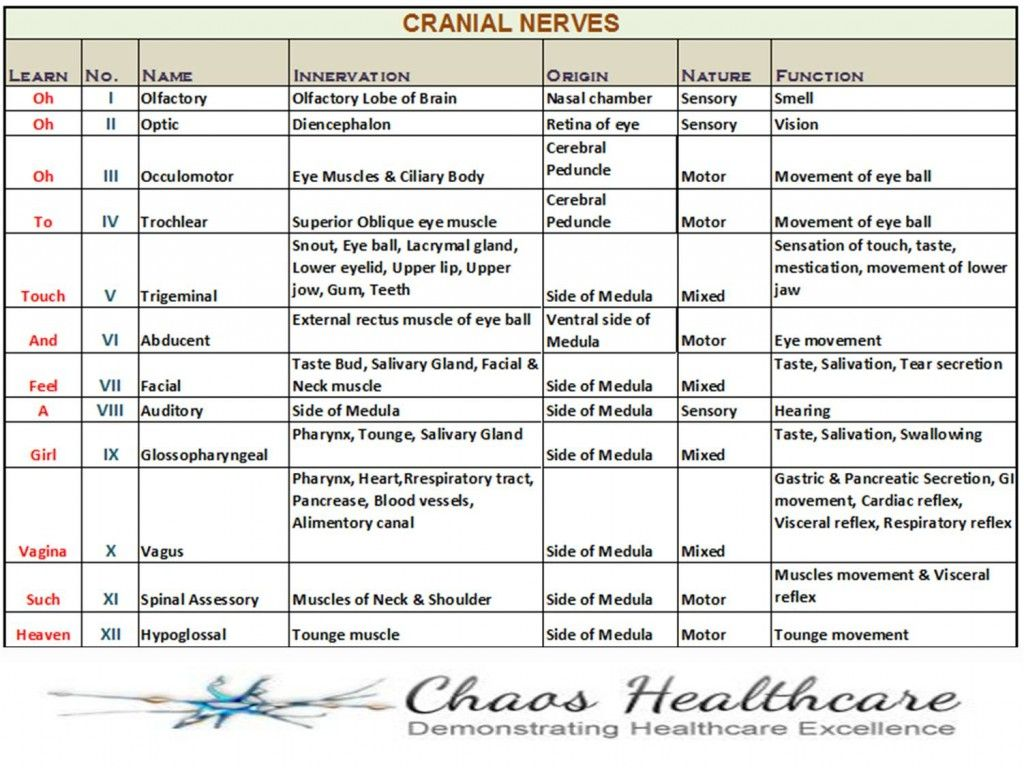 cranial nerves | snays | need to know nurse info | pinterest, Human Body