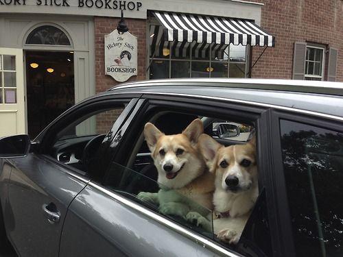 Corgis love running errands!!!