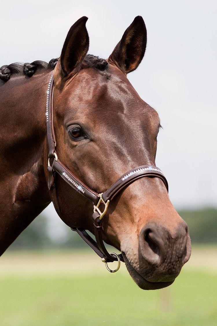 Pin von Sara Diamondriver auf Zwierzęta Pferde, Tiere, Esel