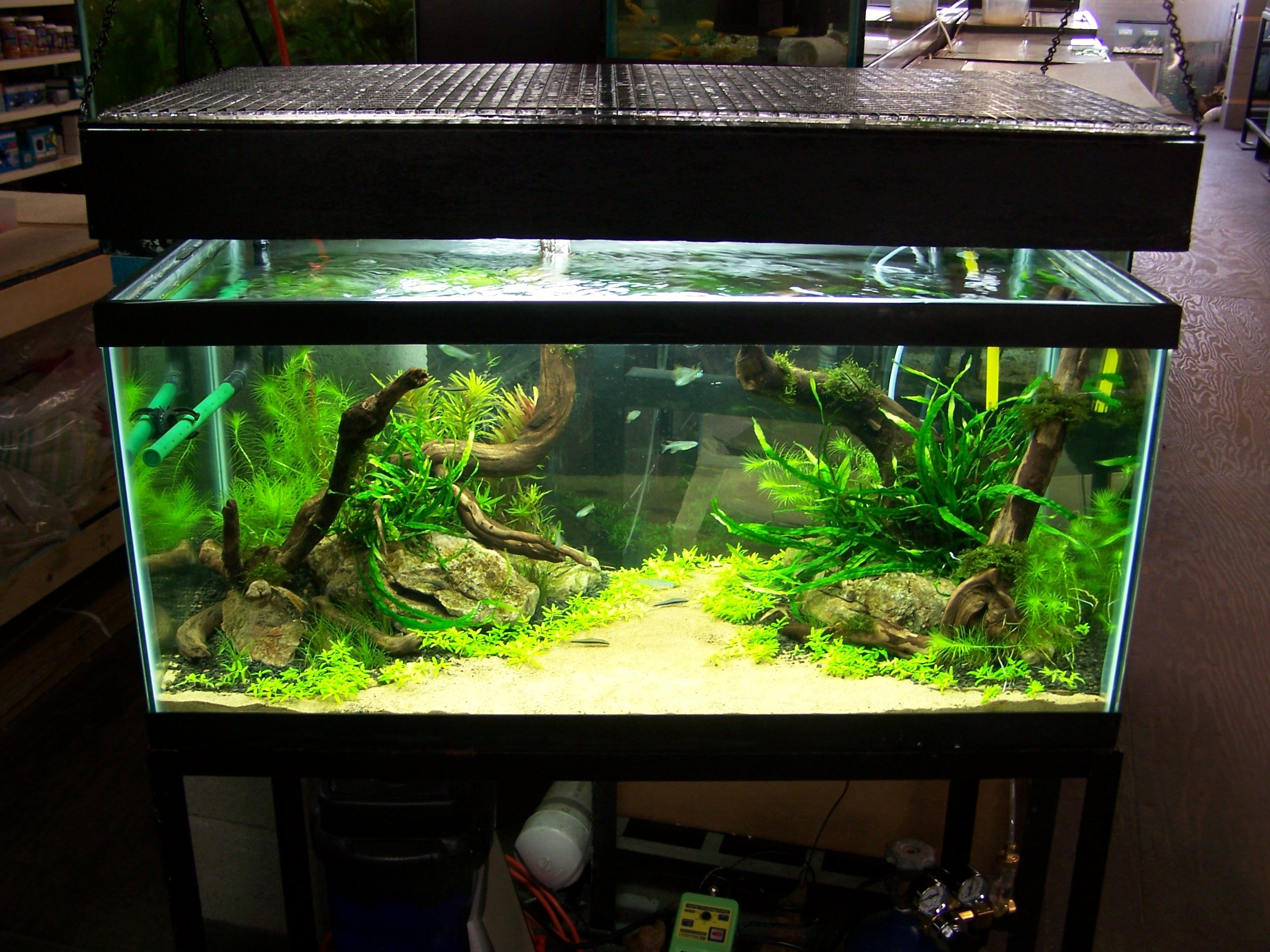 like the layout | Aquascape design, Aquascape, Aquarium