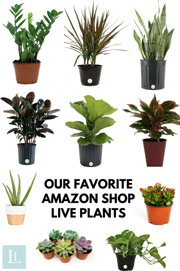Indoor Plants You Can Buy Online Our Favorite Amazon Shop Live Plants Plants Indoor Plants Hanging Plants Indoor