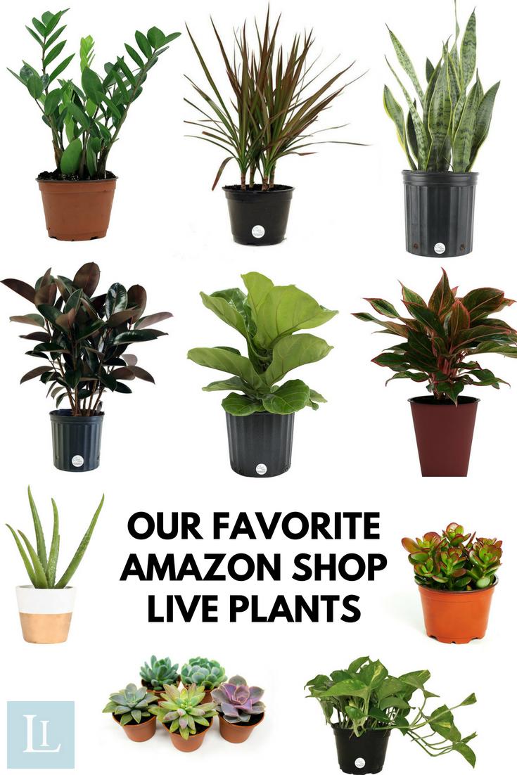 Indoor Plants You Can Buy Online Our Favorite Amazon Shop Live Plants Plants Indoor Plants Hanging Plants Indoor