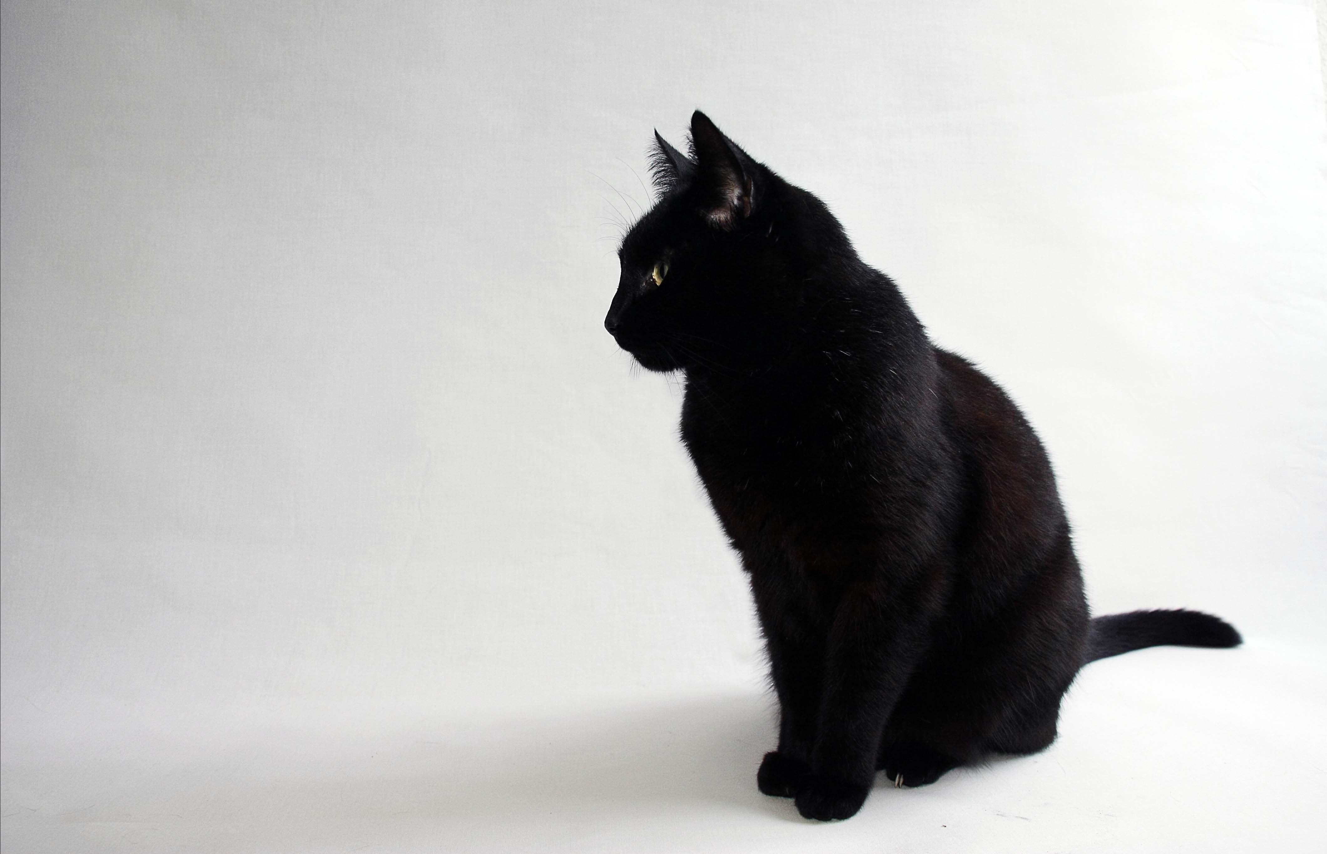 15 Enchanting Wallpapers Of Beautiful Black Cats Morewallpapers