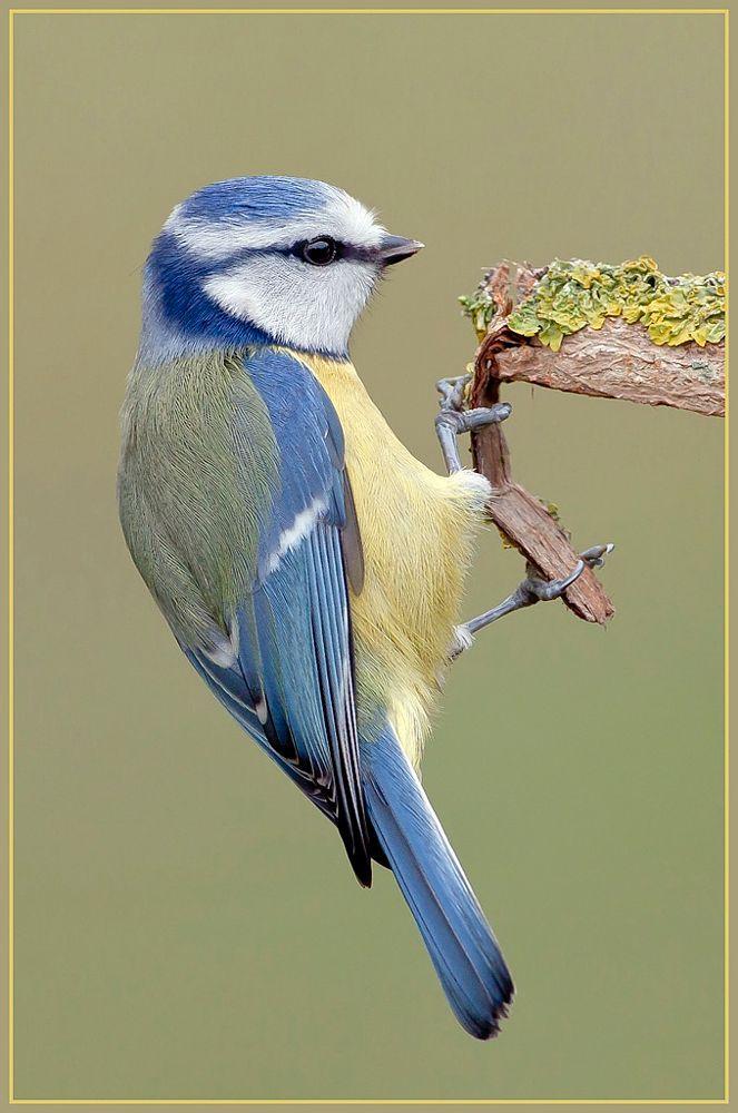 pin auf vögel kunst