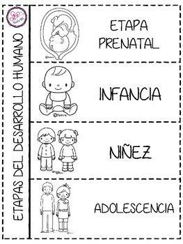 Etapas Del Desarrollo Humano Educación Etapas Del