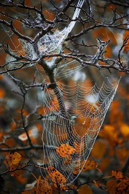 Nature Gets Ready for Halloween\ - natural halloween decorations