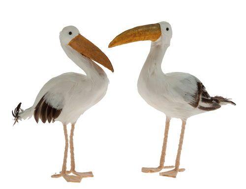 175.300 - Dekovogel Seagull