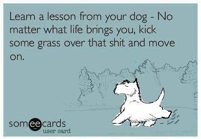 Learn a lesson from your dog. No matter what life brings you, kick some grass over that shit and move on. Lol