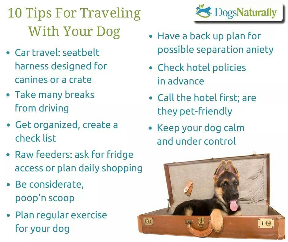 Tips for traveling w/your dog