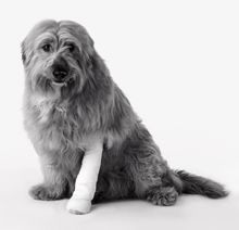 4 quick questions on pet insurance—answered